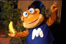Matcham Monkey