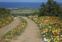 West Coast / Explore with Car Rental Cape Town the West Coast District and get an idea of its wonder and beauty.