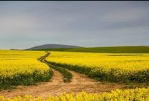 The Overberg / The Western Cape's gloriously majestic mountain range habitat, the Overberg and all of its beauty.