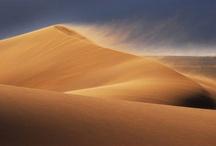 Desert / Camels