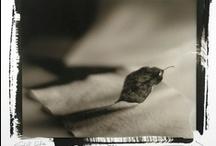 """Alternative process - photography / Peter W. Haas I. Kallitype with Platina toner 8x10"""" contact negative"""