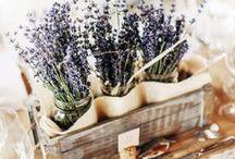 Lavender Wedding / Levandulova svadba