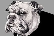 My animal drawings / animal drawings