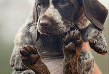 Doggies / by Karie Ludwig