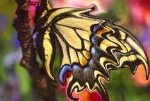 Butterflies / by * RobsFan-tasy *