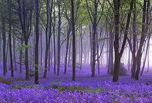 4 seasons / The beauty of the four seasons / by Laura O'Neill