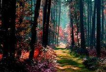 •Pacific, tropics, green spaces