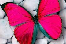 Butterflies / by Laura O'Neill