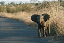Africa and Kruger National Park