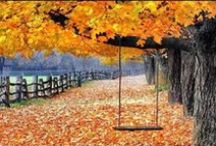 ~ Autumn ~