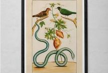 ANTIQUE NATURE PRINTS / Beautiful Antique Nature Print Reproductions for your Wall.  Perfect to add charm, beauty and a distinguished look to any room.