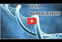 Genetics / Learn about genetics