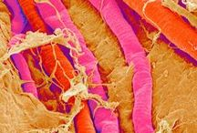 Nano Photography / Microscopic Images - a glimpse into the intricate world under the microscope! Learn about the Cell Characterisation work at the NICB at http://nicb.ie/cell-characterisation/