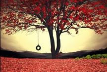 Beauty around us / ...anything beautiful...