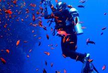 Scuba / Dive dalış tüplü dalış serbest dalış