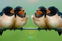 Bird / 鳥の画像、デザイン