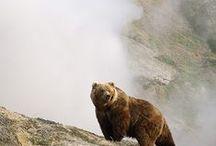 brothers bears