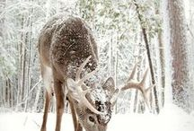 Cool Animal/Nature Images