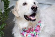 PRETTY IN PINK / all things pink | pink flowers | pink dog beds | pink watches | pink bandanas | pink doors | pink paint