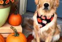HAPPY THANKSGIVING / all things thanksgiving for your home and your pet; activities, crafts, decor and recipes.