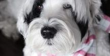 ADORABLE DOGS IN FLANNEL BANDANAS / Personalized Flannel Dog Bandanas by Three Spoiled Dogs