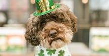 ST. PATRICK'S DAY / all things st patrick's day; activities, crafts, decor and recipes.