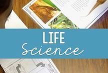 Science: Life Science / Life science concepts such as animals, plants, life cycles, ecosystems, and human body.