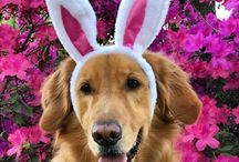 EASTER / Fabulous Easter Fun for Everyone | DIY activities, crafts, decor, recipes and dog bandanas