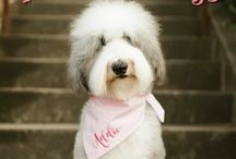 PERSONALIZED DOG BANDANAS • GINGHAM • SEERSUCKER / Dog Bandanas | Personalized Pet Bandanas for Every Day | Design Your Own Bandana for All Occasions | Just Because | Birthdays | Weddings | Gender Reveals | Family Photos | Holiday Cards | The Best Bandanas by Three Spoiled Dogs