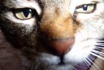 Tiere! / Mais gatinhos!