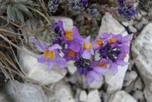 Flowers & Gardens from Italy / Fiori, piante e giardini in giro per l'Italia
