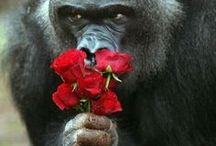 Animals I So Love~ / by Tina