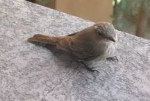 Abitanti del giardino / Birds & Co. love my garden!