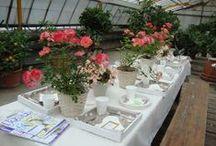 Eventi & Festività / Mostre, party e festività di una giardiniera