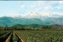 Vineyards & Farms / Le più belle tenute e cantine. Most beautiful vineyards and farms.