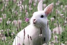 ❅ Spring awakening