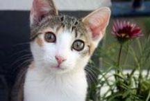 CaTs / Przede wszystkim mój kot i te ... greckie przeze mnie sfotografowane