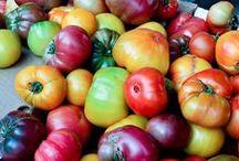 Tomaten auf Balkonien