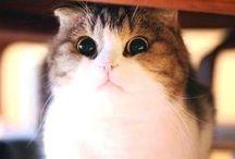 Αστείες Εικόνες Ζώων