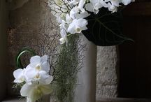 Flower . Flower Arrangement