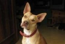 Dogs Who Need a Home / Adopt us! http://dinorescue.com/adoption-form/