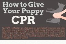 Canine Health + First Aid