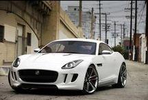 Jaguar / Jaguar