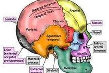 Cranio Sacral Therapy / Terapia Cranio-Sacrale