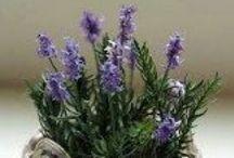 Tutoriales flores y plantas 1:12