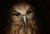New Zealand Bird Gallery