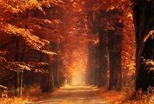Paths / Dreamy, wonderful, bright, dark, beautiful paths. / by Khaleesi