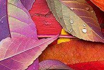 Autumn / Beautiful Autumn. My favorite season.