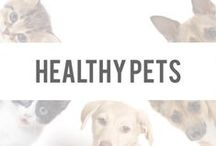 Healthy Pets / Because our pets are part of the family, so why shouldn't they be healthy as well? Here you'll find everything you need to keep your pets healthy and happy! / by Okuma Nutritionals | SlimTea