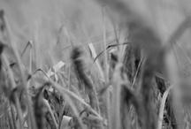 Cropland movement